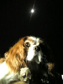 コリンとお月見.jpg