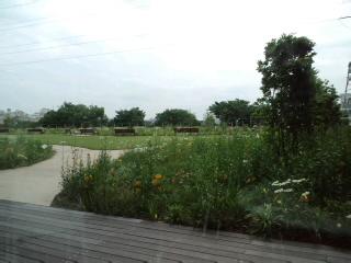 屋上の庭も寂しげです.jpg